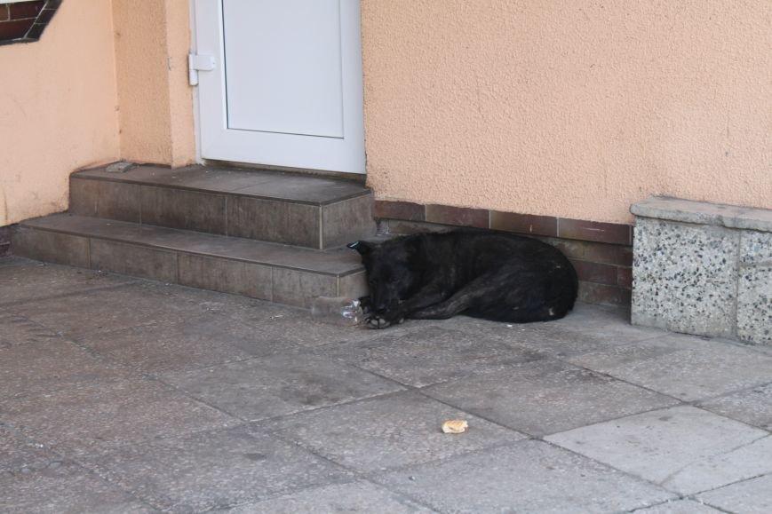 Ужгородський вокзал: атмосфера «Трьох горбів», стихійна торгівля та бродячі пси, фото-10