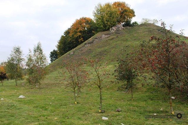 Волонтёры просят спасти деревья в центре Гродно, «Гроднозеленстрой» молчит, фото-5