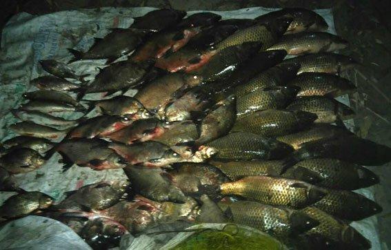 На Полтавщине два браконьера выловили более 100 кг рыбы на территории государственного заказника (ФОТО), фото-1
