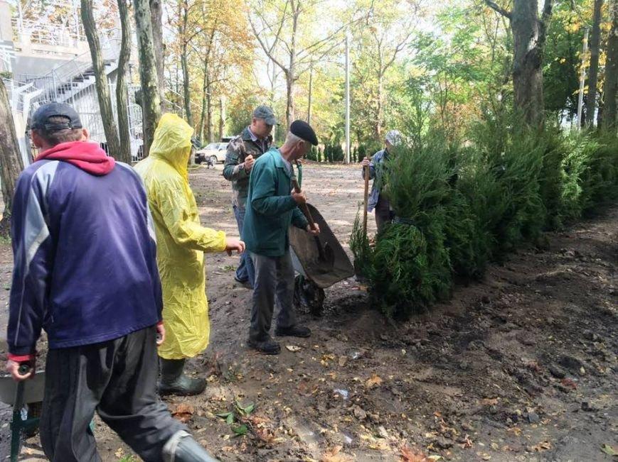 Херсонцы в парке им. Маргелова высадили 200 туй (фото), фото-1