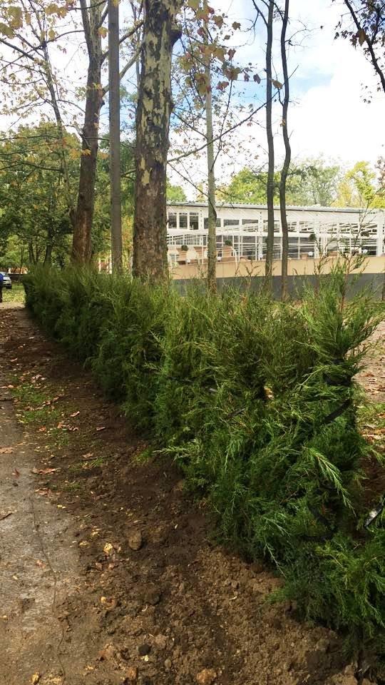 Херсонцы в парке им. Маргелова высадили 200 туй (фото), фото-2