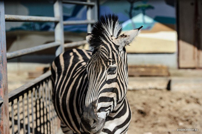 """""""Любить животных больше, чем людей - это все-таки странно"""": как житель Гродно оставил высокий пост в милиции ради работы в зоопарке, фото-14"""