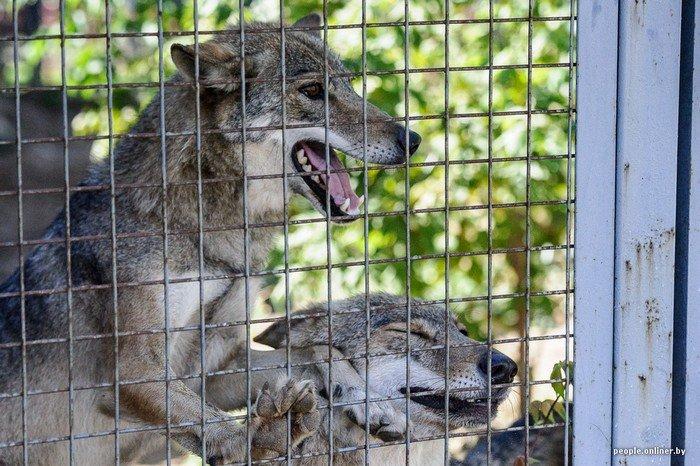"""""""Любить животных больше, чем людей - это все-таки странно"""": как житель Гродно оставил высокий пост в милиции ради работы в зоопарке, фото-1"""
