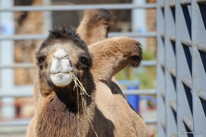 """""""Любить животных больше, чем людей - это все-таки странно"""": как житель Гродно оставил высокий пост в милиции ради работы в зоопарке, фото-13"""