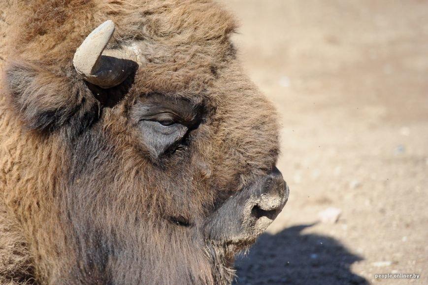 """""""Любить животных больше, чем людей - это все-таки странно"""": как житель Гродно оставил высокий пост в милиции ради работы в зоопарке, фото-9"""