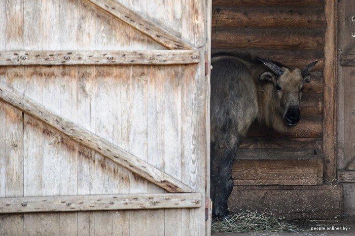 """""""Любить животных больше, чем людей - это все-таки странно"""": как житель Гродно оставил высокий пост в милиции ради работы в зоопарке, фото-8"""