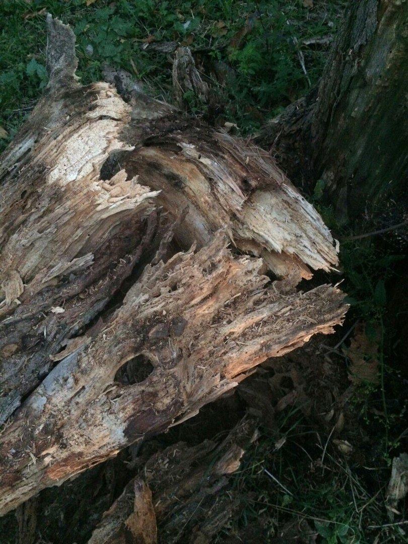 В Харькове на движущуюся иномарку упало дерево (ФОТО), фото-2