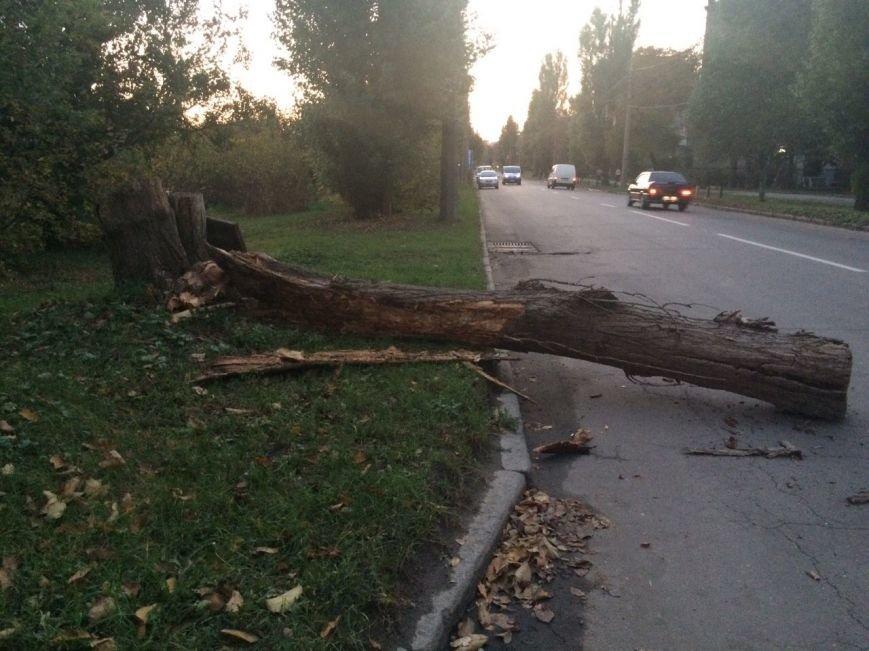 В Харькове на движущуюся иномарку упало дерево (ФОТО), фото-1