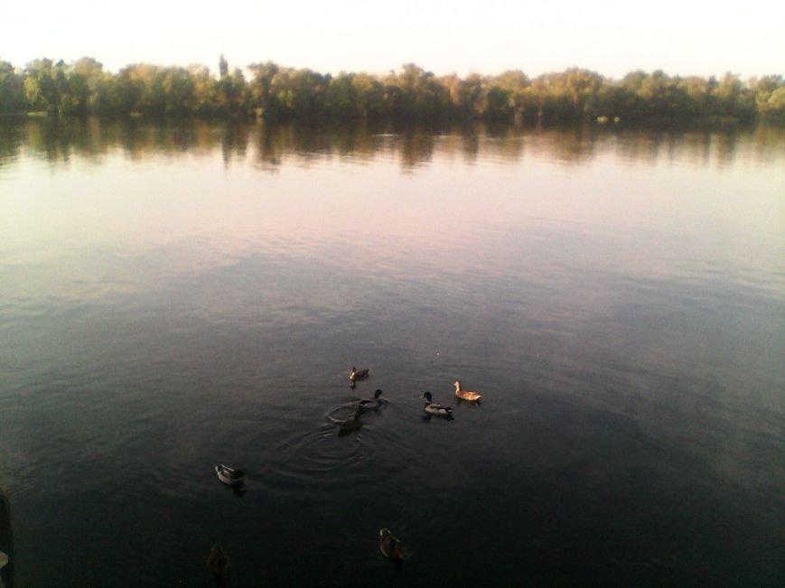 В херсонском Гидропарке завелись ручные утки (фото), фото-1