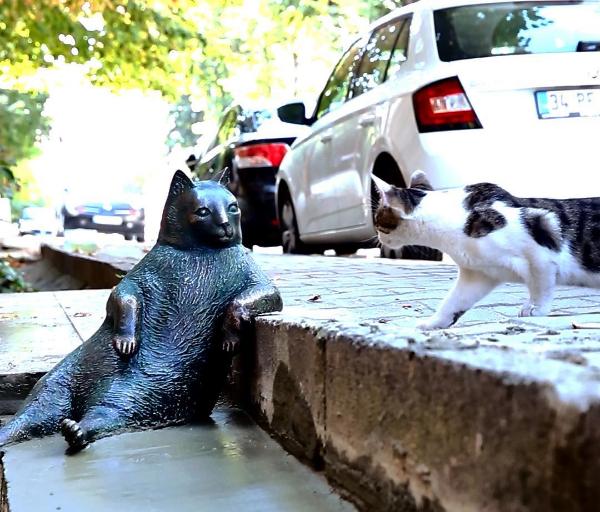 Курйози тижня: Букет для Путіна, експерт Азаров, мрія американки і головний кіт Стамбула, фото-4