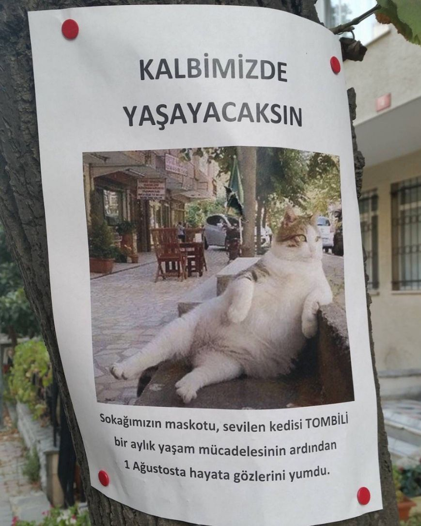 Курйози тижня: Букет для Путіна, експерт Азаров, мрія американки і головний кіт Стамбула, фото-3