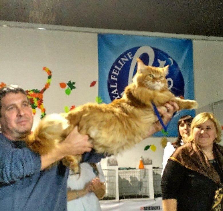 4-летнего Кекса из Днепра выбрали самым большим котом в Украине (ФОТО), фото-2