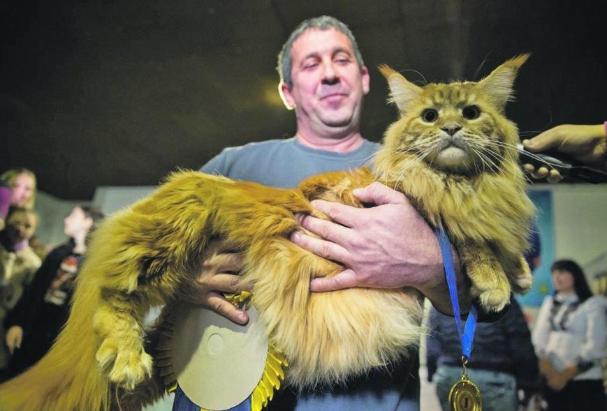 4-летнего Кекса из Днепра выбрали самым большим котом в Украине (ФОТО), фото-3