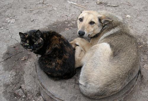 В Гадяче на Полтавщине истребят всех бездомных животных, фото-2