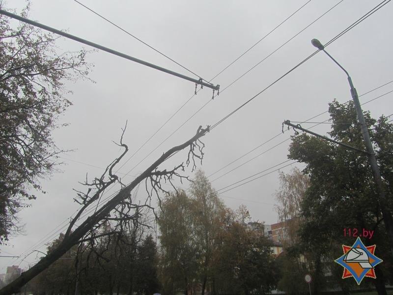 В Гродно спасателям пришлось распиливать дерево, которое средь бела дня упало на троллейбусную линию, фото-4