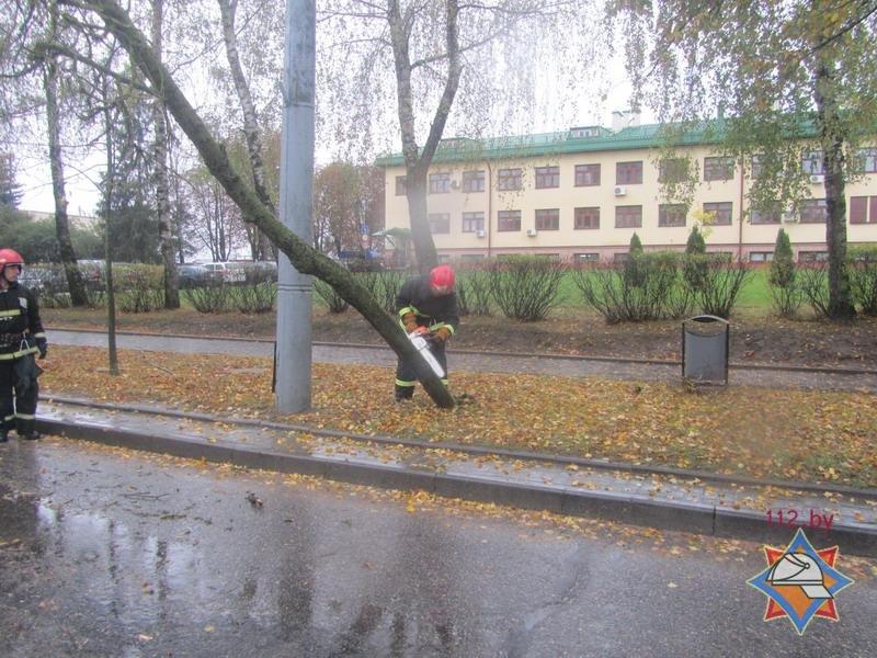 В Гродно спасателям пришлось распиливать дерево, которое средь бела дня упало на троллейбусную линию, фото-5