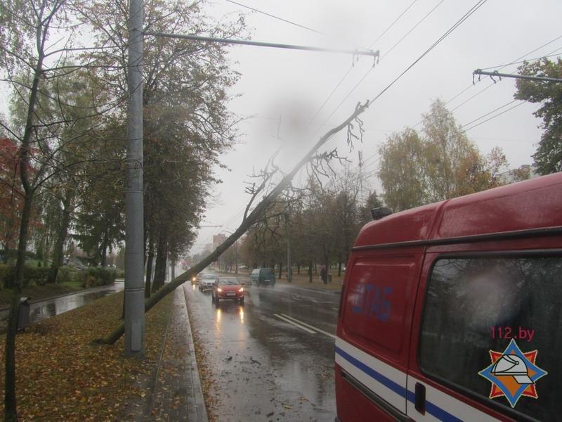 В Гродно спасателям пришлось распиливать дерево, которое средь бела дня упало на троллейбусную линию, фото-2