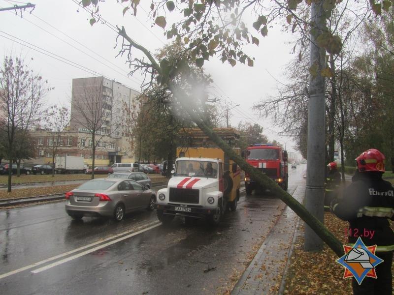 В Гродно спасателям пришлось распиливать дерево, которое средь бела дня упало на троллейбусную линию, фото-1
