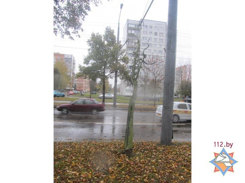 В Гродно спасателям пришлось распиливать дерево, которое средь бела дня упало на троллейбусную линию, фото-3
