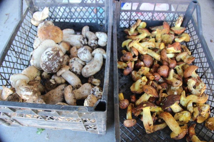 Первые жертвы грибов: два херсонца скончались, фото-3