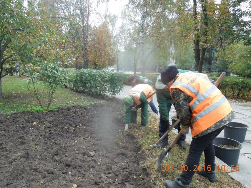 Ивы, сливы, барбарис: в кременчугских скверах и парках высаживают новые кусты и деревья (ФОТО), фото-14
