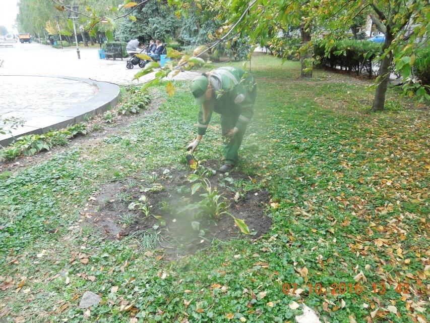 Ивы, сливы, барбарис: в кременчугских скверах и парках высаживают новые кусты и деревья (ФОТО), фото-26