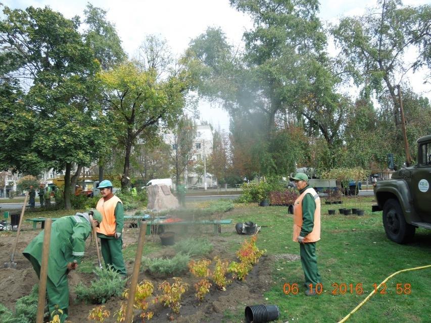Ивы, сливы, барбарис: в кременчугских скверах и парках высаживают новые кусты и деревья (ФОТО), фото-16