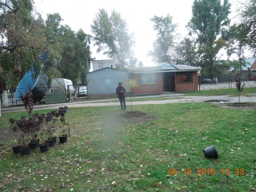 Ивы, сливы, барбарис: в кременчугских скверах и парках высаживают новые кусты и деревья (ФОТО), фото-19