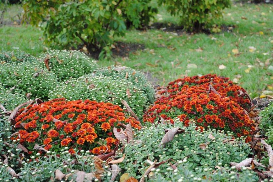 Ивы, сливы, барбарис: в кременчугских скверах и парках высаживают новые кусты и деревья (ФОТО), фото-4