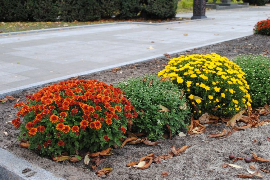 Ивы, сливы, барбарис: в кременчугских скверах и парках высаживают новые кусты и деревья (ФОТО), фото-6