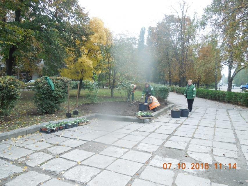 Ивы, сливы, барбарис: в кременчугских скверах и парках высаживают новые кусты и деревья (ФОТО), фото-25