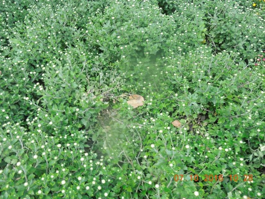 Ивы, сливы, барбарис: в кременчугских скверах и парках высаживают новые кусты и деревья (ФОТО), фото-24