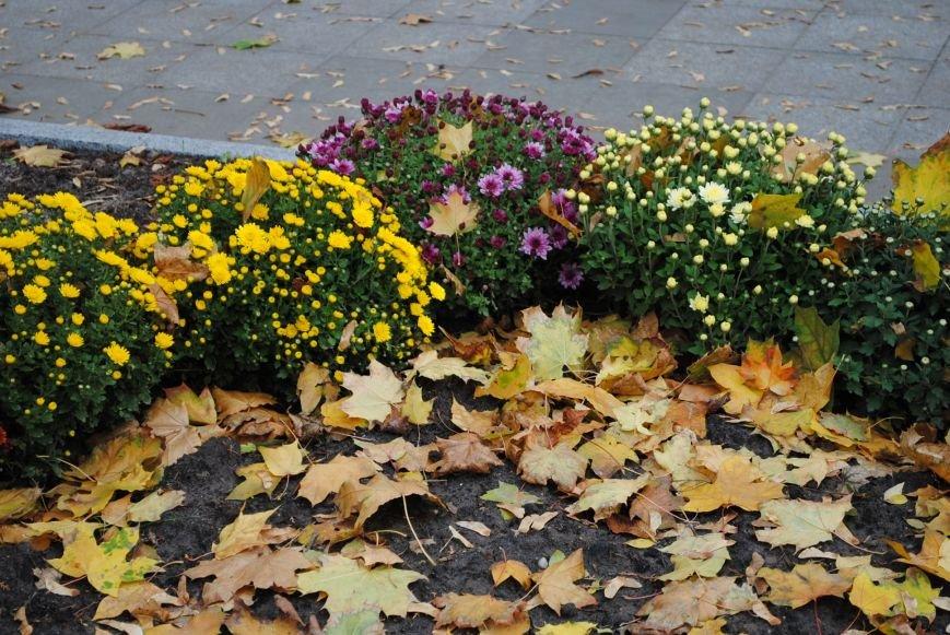 Ивы, сливы, барбарис: в кременчугских скверах и парках высаживают новые кусты и деревья (ФОТО), фото-12