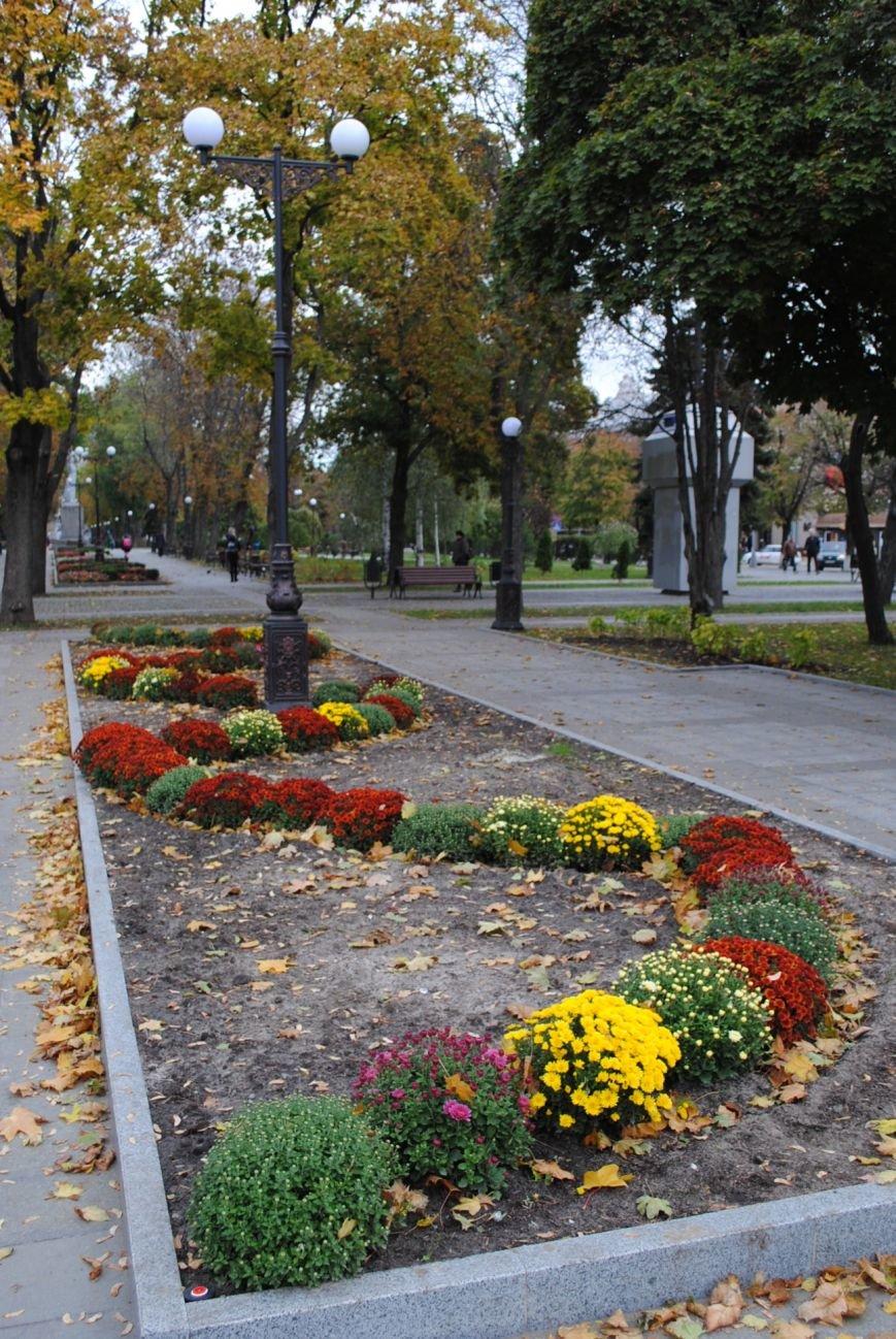 Ивы, сливы, барбарис: в кременчугских скверах и парках высаживают новые кусты и деревья (ФОТО), фото-8