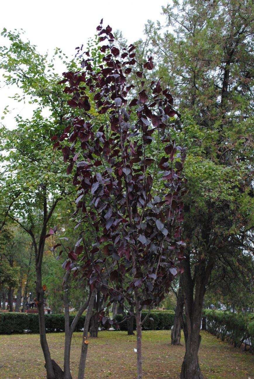 Ивы, сливы, барбарис: в кременчугских скверах и парках высаживают новые кусты и деревья (ФОТО), фото-5