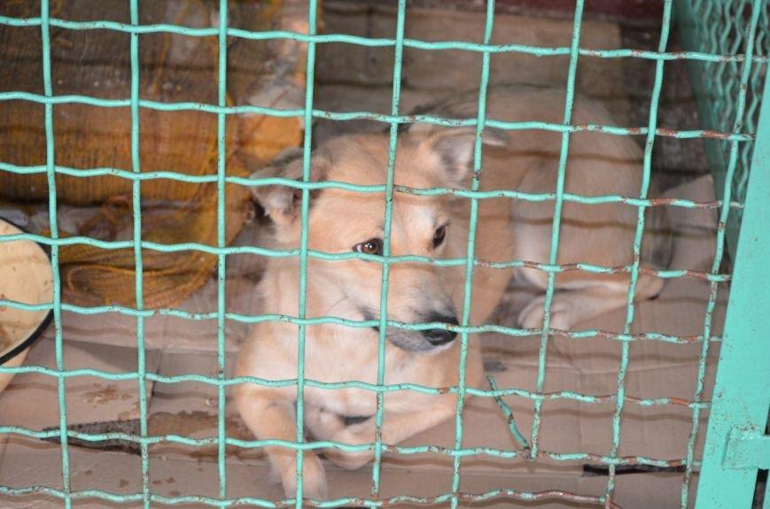 В  Мариуполе бездомных собак накормили элитной колбасой (ФОТО+ВИДЕО), фото-13