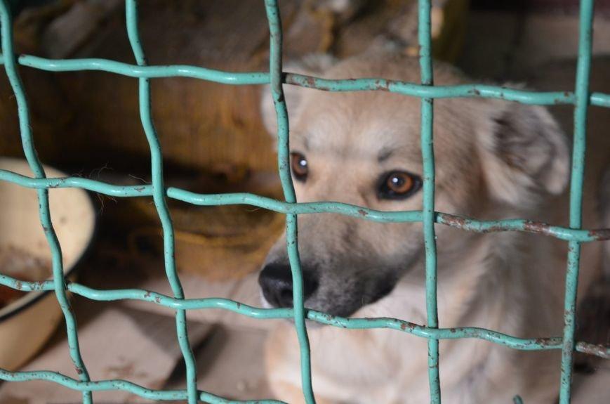 В  Мариуполе бездомных собак накормили элитной колбасой (ФОТО+ВИДЕО), фото-8