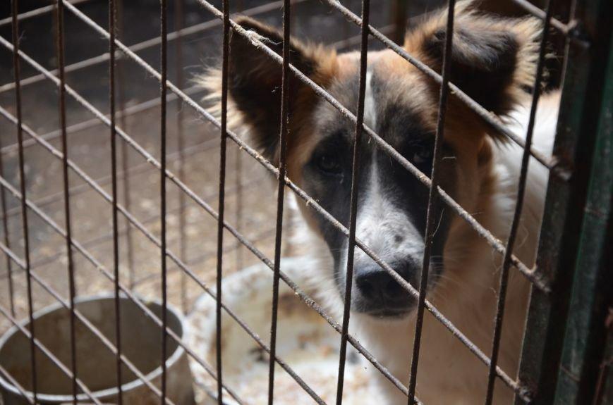 В  Мариуполе бездомных собак накормили элитной колбасой (ФОТО+ВИДЕО), фото-4