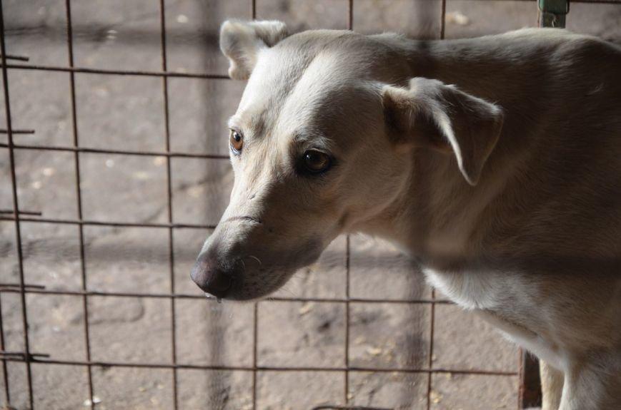 В  Мариуполе бездомных собак накормили элитной колбасой (ФОТО+ВИДЕО), фото-9