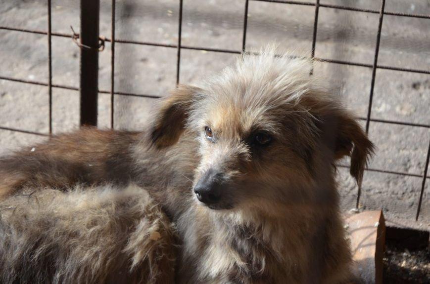 В  Мариуполе бездомных собак накормили элитной колбасой (ФОТО+ВИДЕО), фото-14