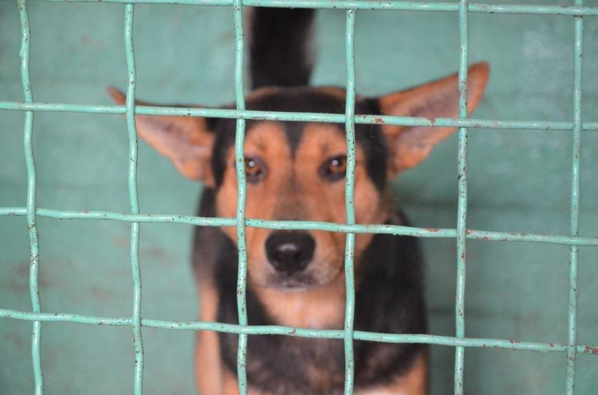 В  Мариуполе бездомных собак накормили элитной колбасой (ФОТО+ВИДЕО), фото-16