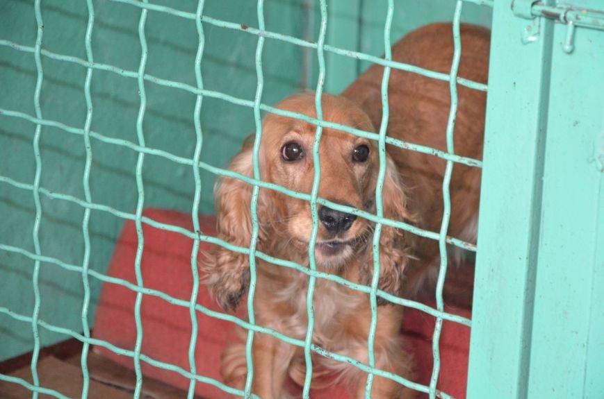 В  Мариуполе бездомных собак накормили элитной колбасой (ФОТО+ВИДЕО), фото-6