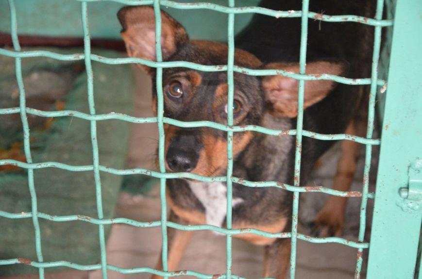В  Мариуполе бездомных собак накормили элитной колбасой (ФОТО+ВИДЕО), фото-15