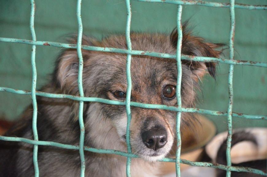 В  Мариуполе бездомных собак накормили элитной колбасой (ФОТО+ВИДЕО), фото-5