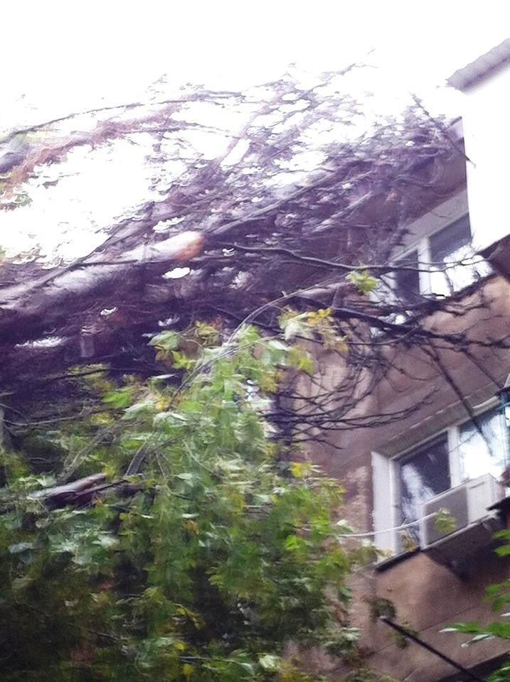 В Херсоне во дворе дома на ул. Мира на жилой дом рухнул тополь (фото), фото-2