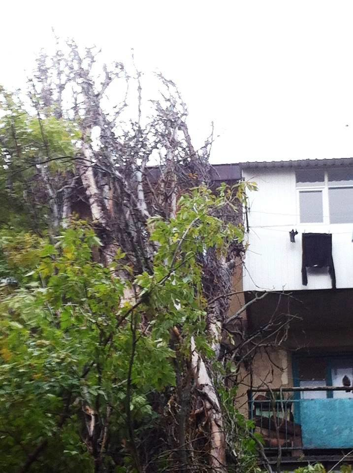 В Херсоне во дворе дома на ул. Мира на жилой дом рухнул тополь (фото), фото-4