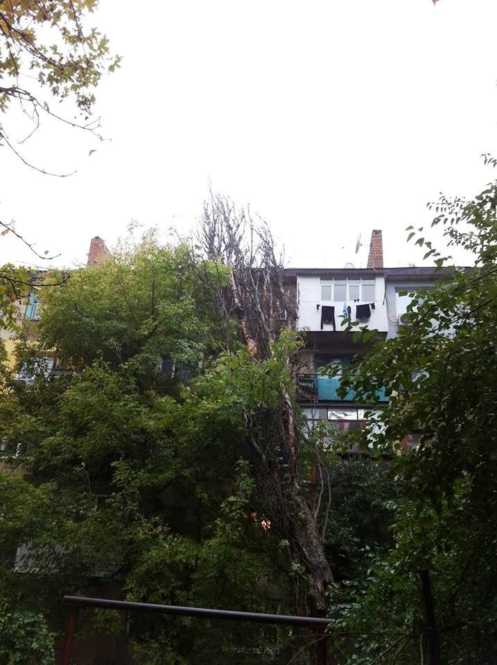 В Херсоне во дворе дома на ул. Мира на жилой дом рухнул тополь (фото), фото-1