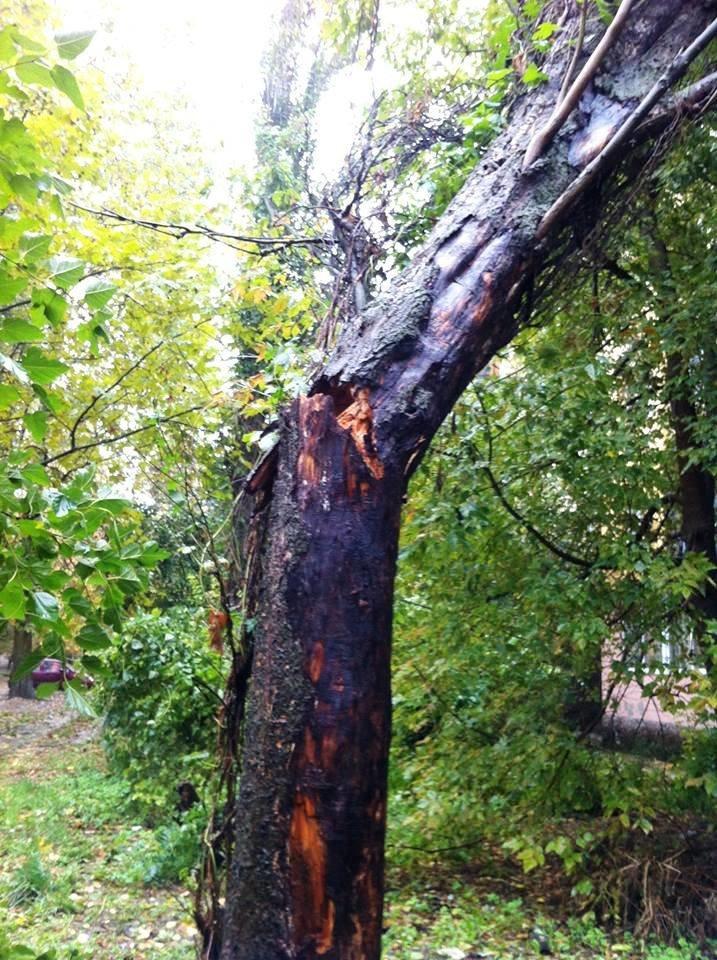 В Херсоне во дворе дома на ул. Мира на жилой дом рухнул тополь (фото), фото-3