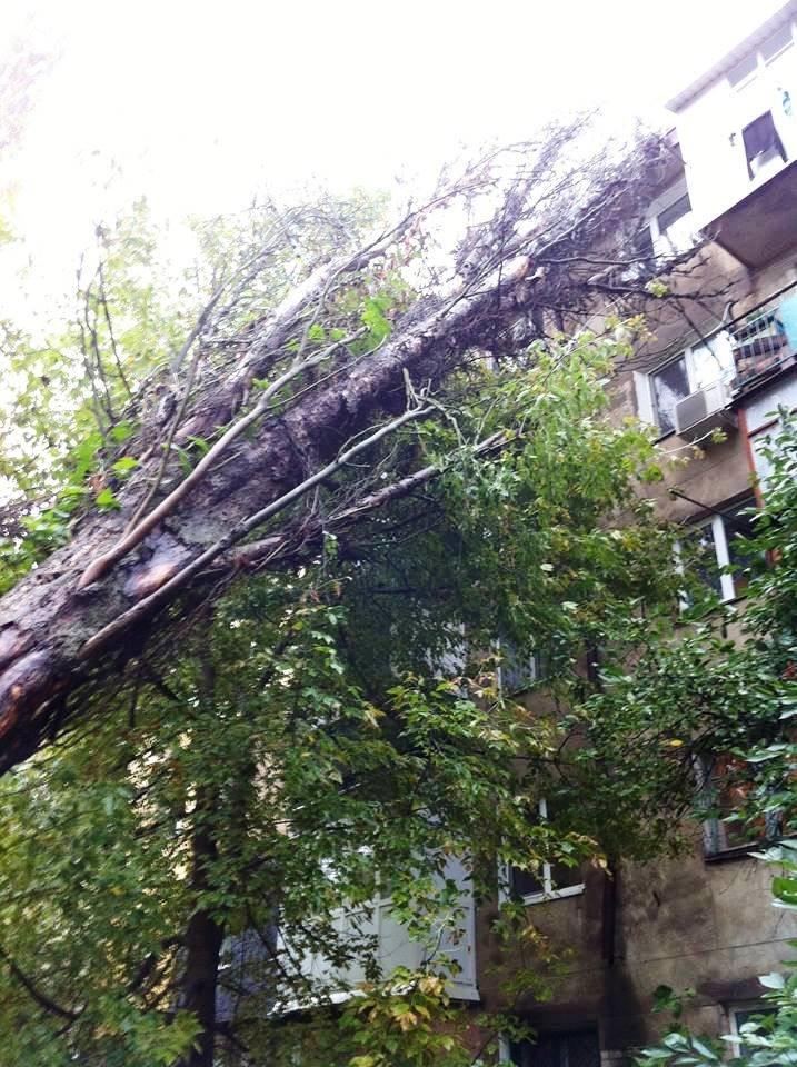 В Херсоне во дворе дома на ул. Мира на жилой дом рухнул тополь (фото), фото-5