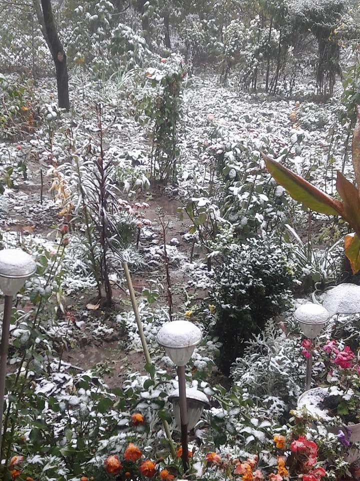 В Чернівцях випав перший сніг, фото-1